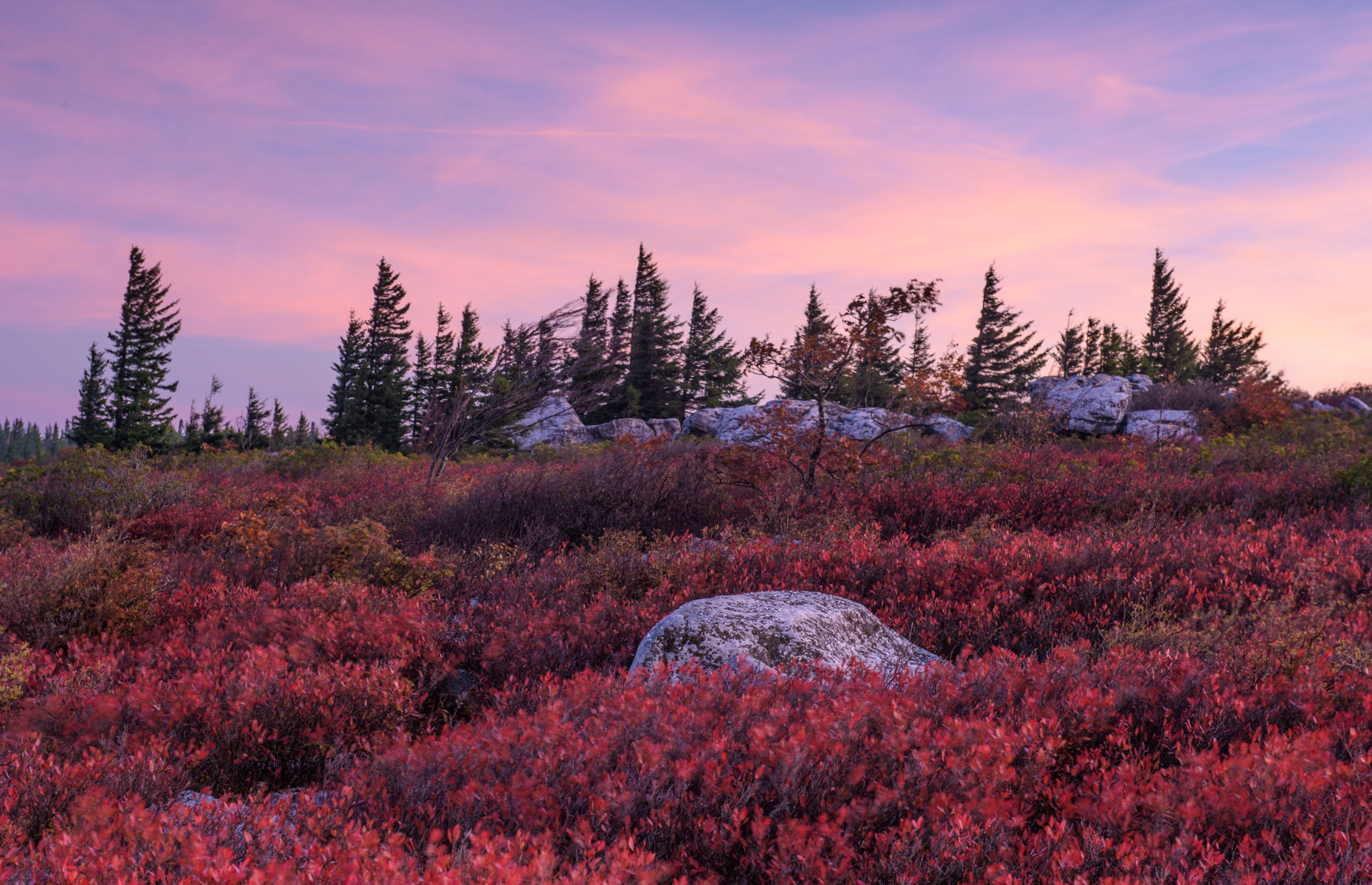 Dolly Sods at Dawn (Davis, West Virginia)