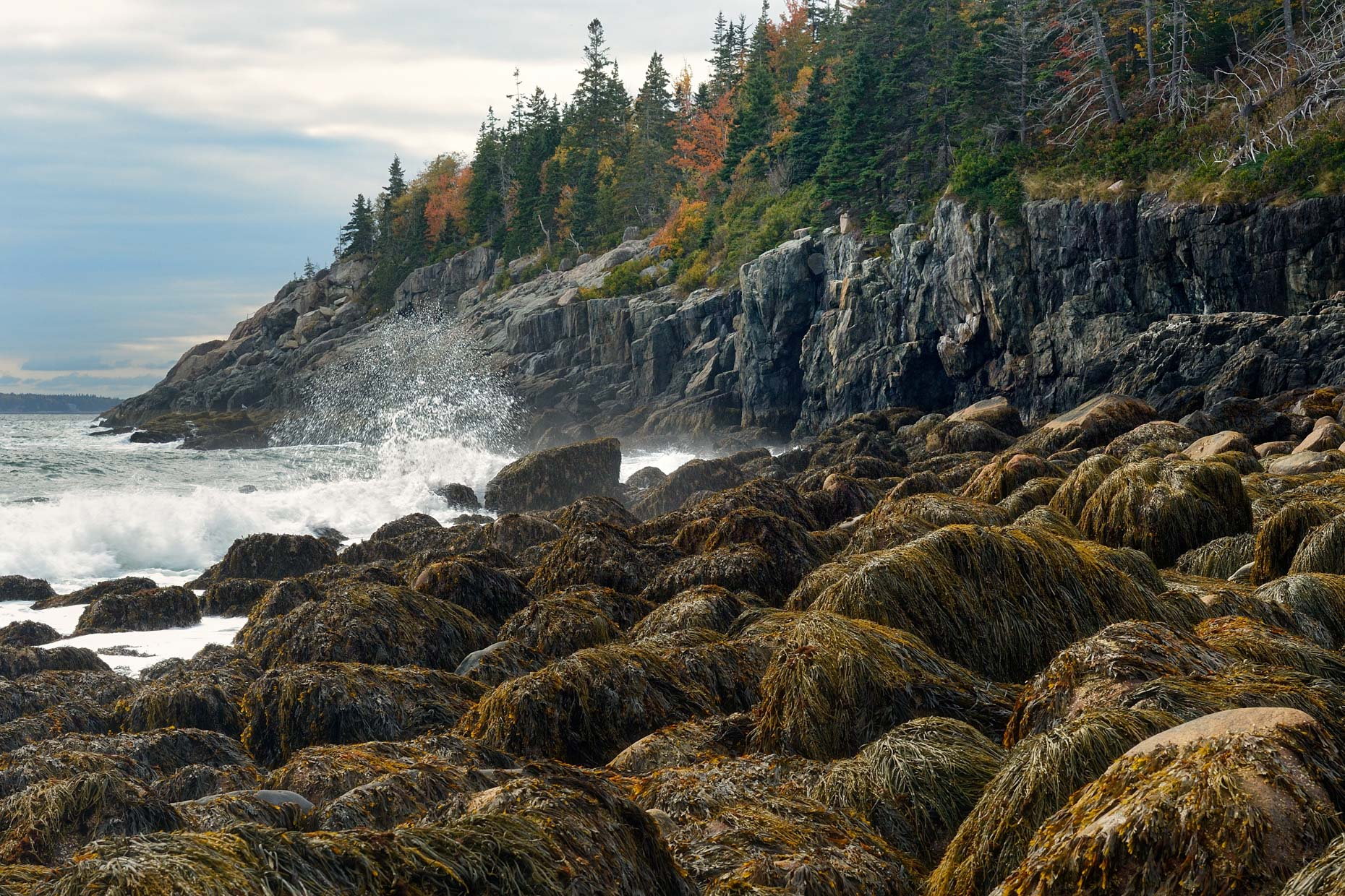 Wild Maine Coastline (Acadia National Park)