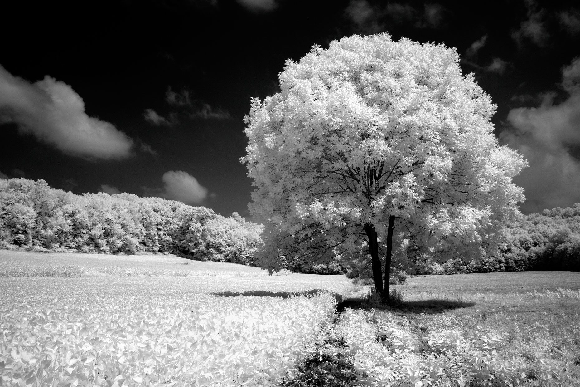 Rural Farm - B&W Infrared (Western PA)